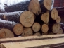 Industrial supply of wood logs and sawn timber